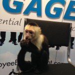 Monkeying Around at SHRM14